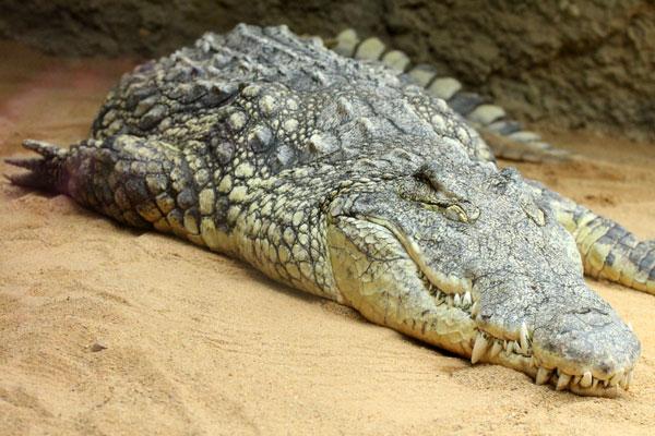 Citytrip Keulen Kölner Zoo Krokodil