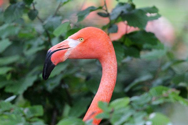 Citrytrip Keulen Kölner Zoo Flamingo