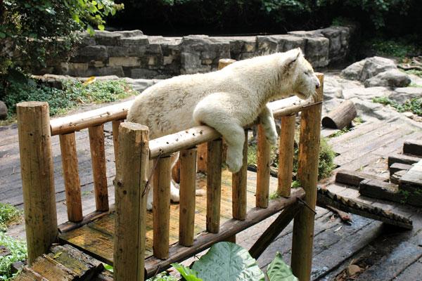 China,-Guangzhou-Chimelong-Xiangjiang-Safari-Park_10