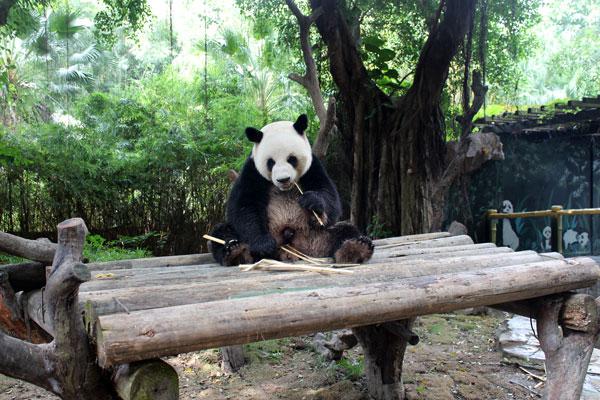 China,-Guangzhou-Chimelong-Xiangjiang-Safari-Park_16
