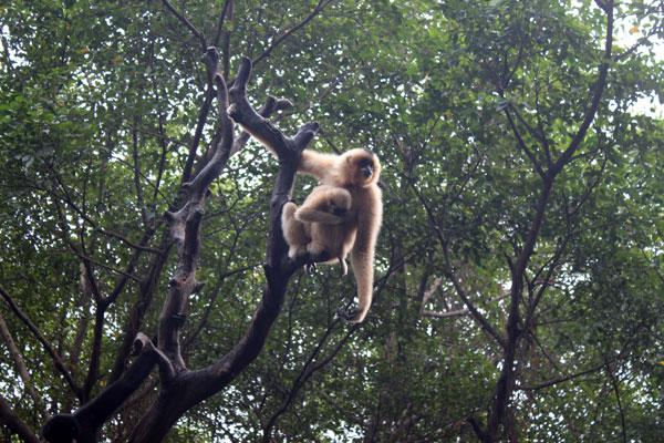 China Guangzhou Chimelong Xiangjiang Safari Park